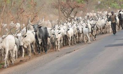quit notice to herdsmen in Ondo forest reserves