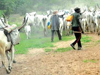 Suspected herdsmen kill Benue varsity student
