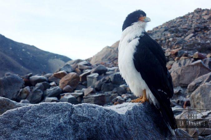 El guardian del Lago Torres