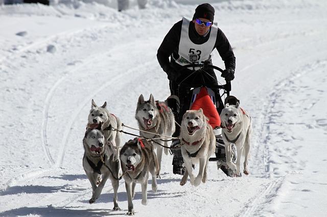 Quels sports peut-on pratiquer avec son chien ?