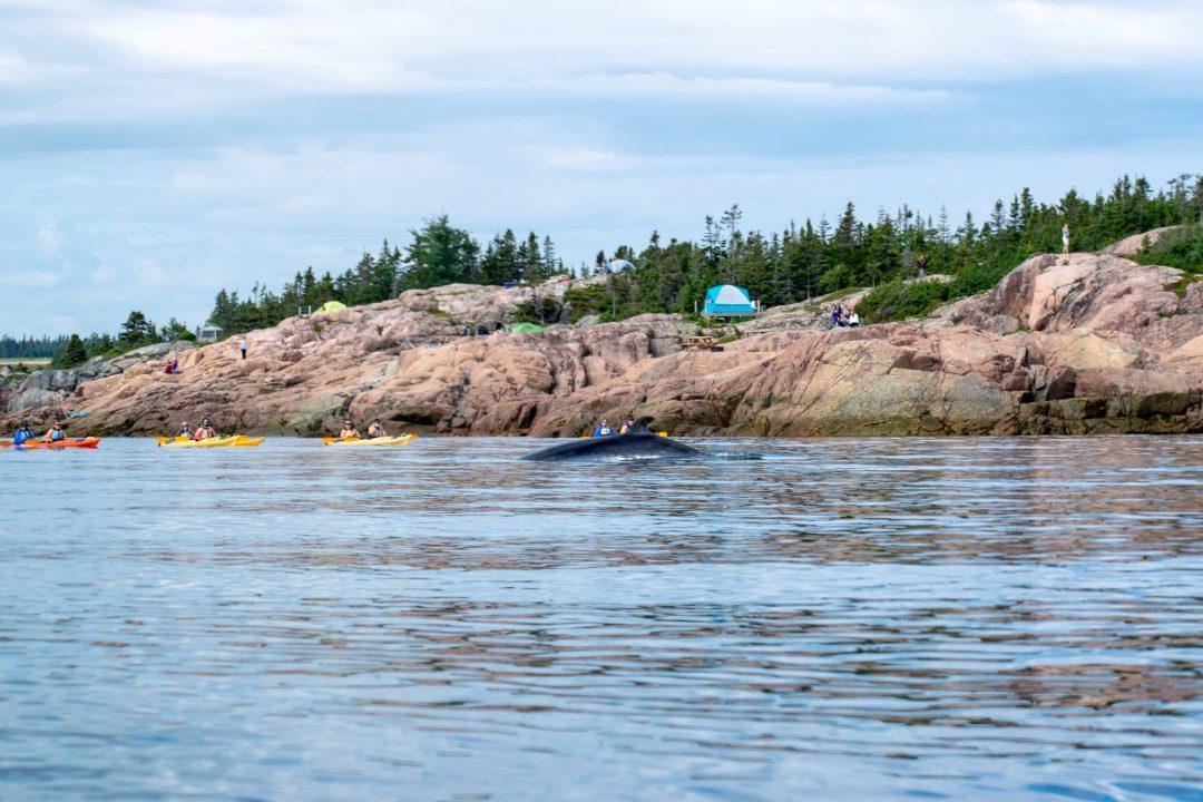 baleine kayak