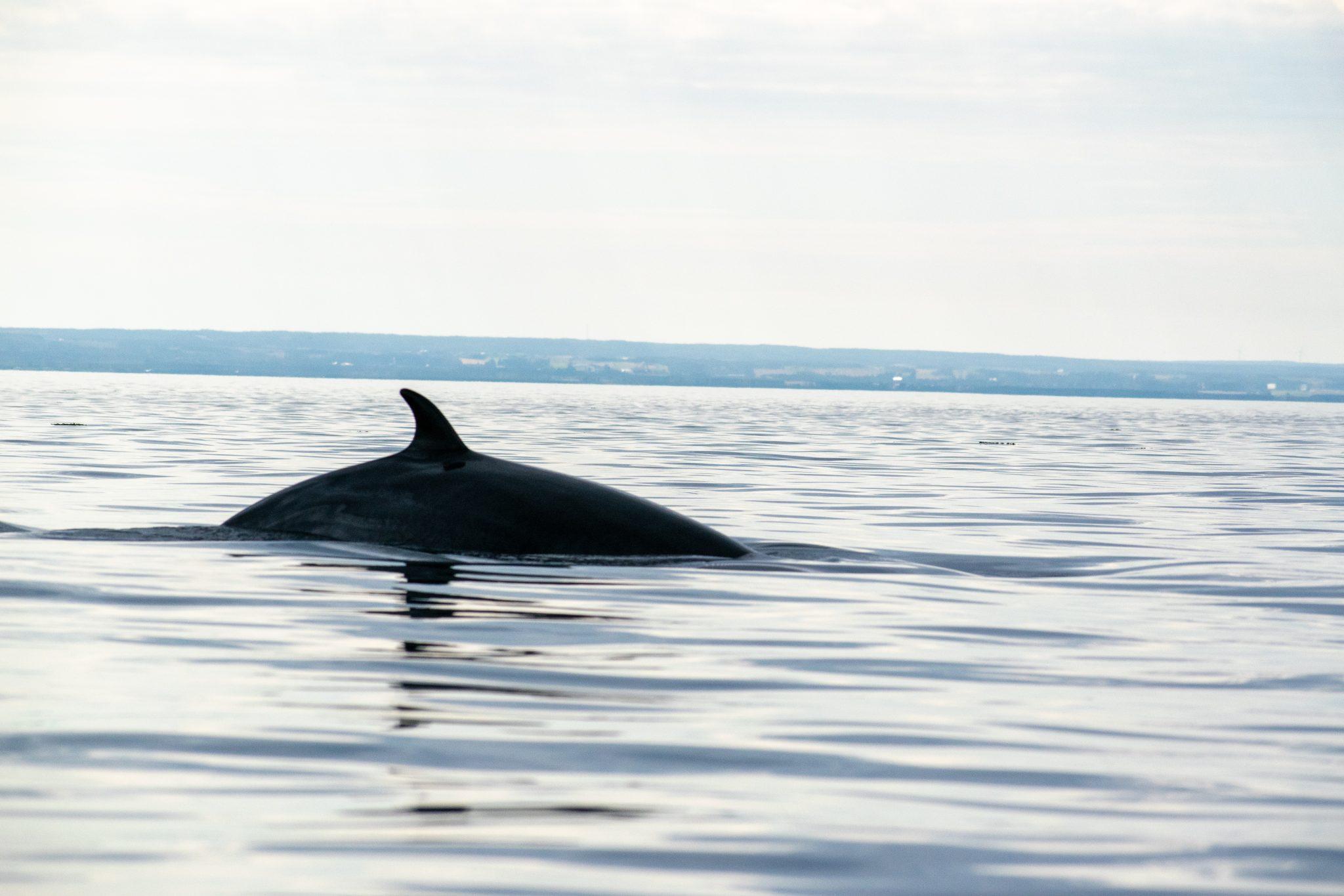 dos baleine