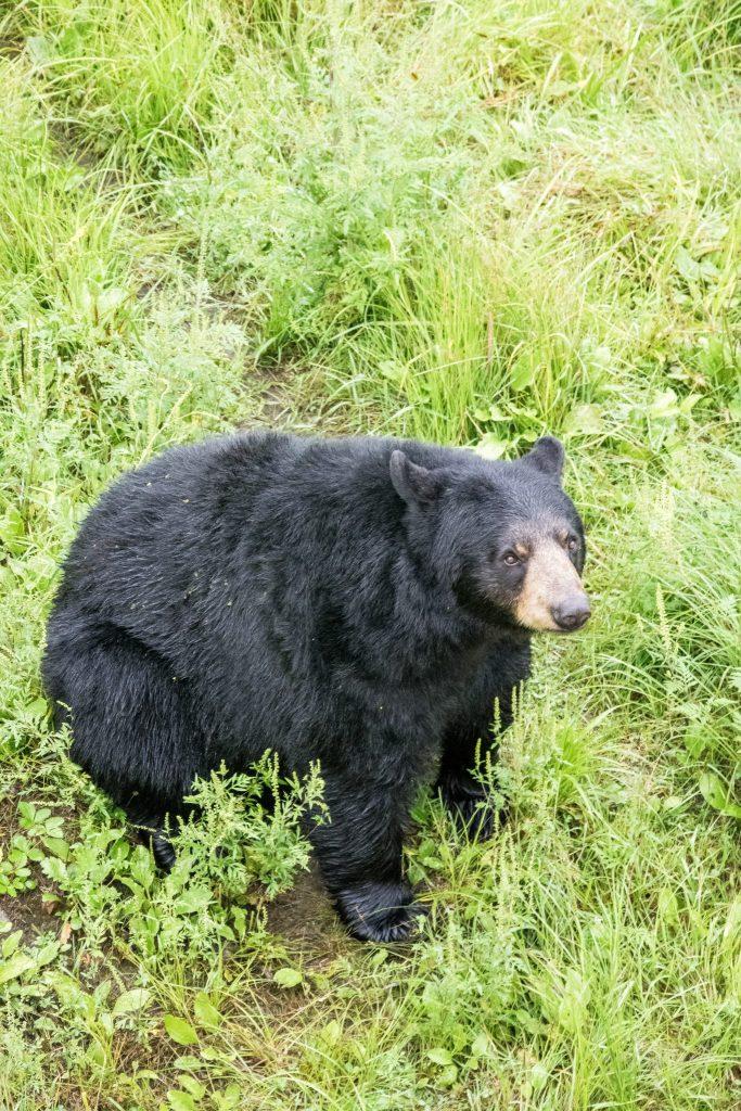 ours parc oméga