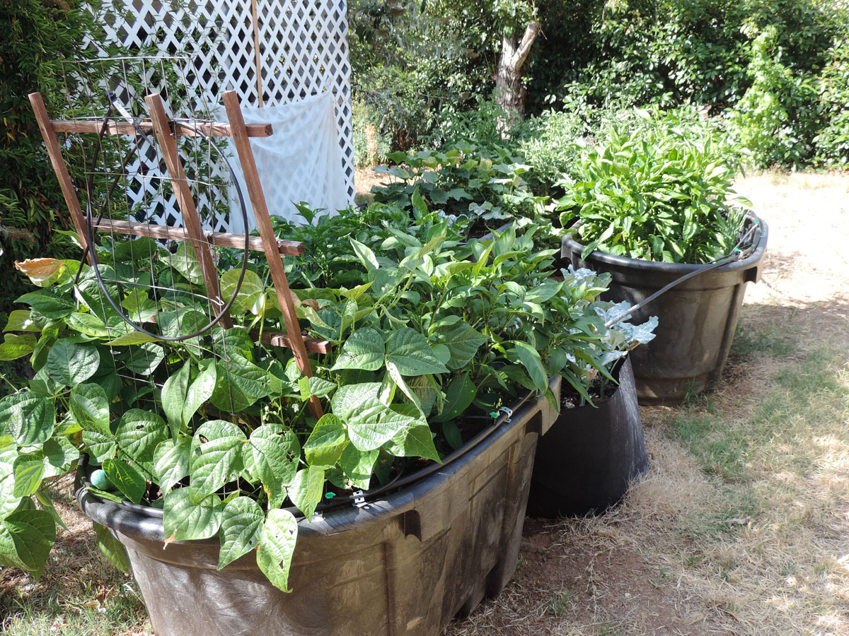 Grow Bags Can be a Useful Tool for Hidden Gardens on Gardening  id=54553