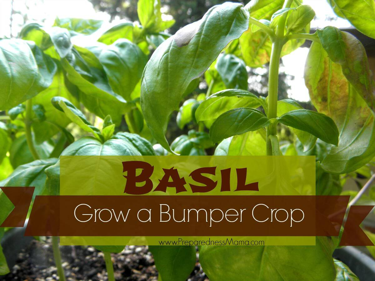 Make Your Own Vegetable Garden