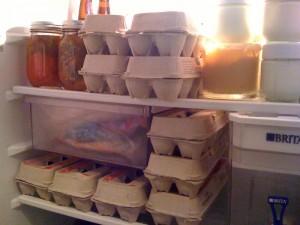 preserving eggs