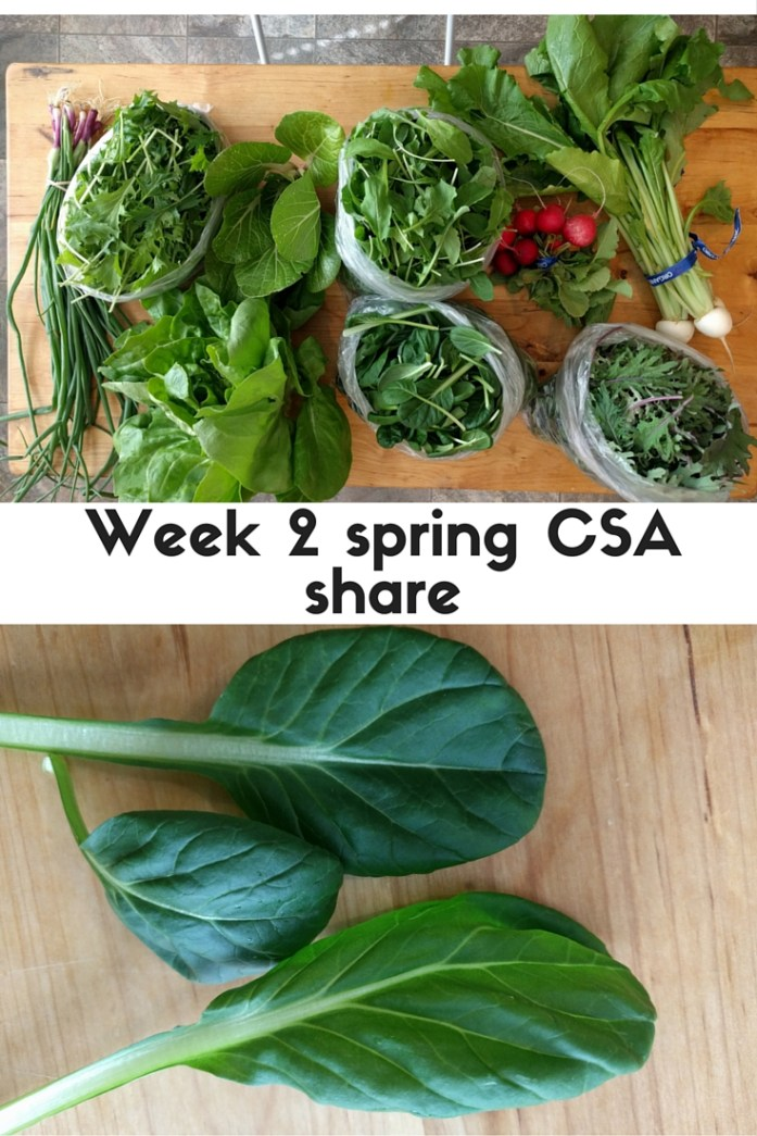 What's in a week 2 spring CSA share and how to use it - tatsoi, mizuna, turnips, radishes, shallots