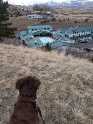 Dog at Chico Hot Springs