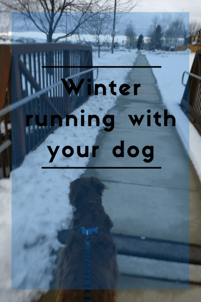 Things to consider before heading out on a winter run with your dog
