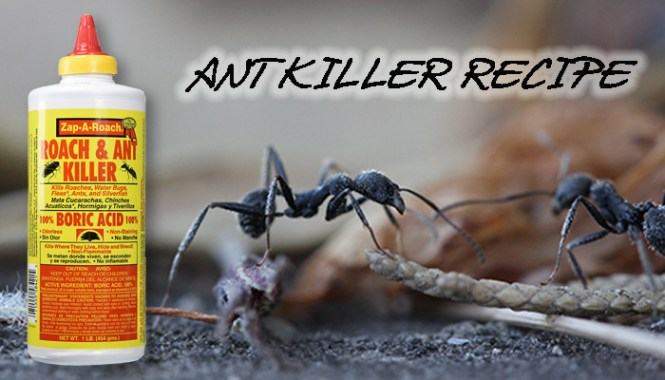 Boric Acid And Maple Syrup Recipe For Ants Ant Baits Require Sweet Or Protein Rich Attractants