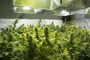 best marijuana stocks