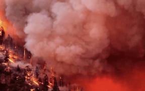416 fire colorado