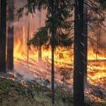 wildfires california trump