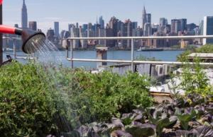 urban farming plants