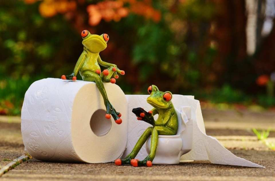 Two frog, one on a toilet session with a phone and other sitting on a toilet paper, staring