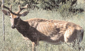 Can chronic wasting disease spread to humans? Scientists think it's not a matter of IF but WHEN