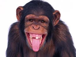 What could possibly go wrong? Scientists inject information directly into the brains of monkeys