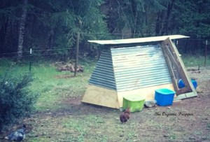 Make a Thrifty DIY Swingset Chicken Coop