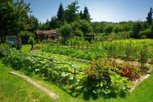 10 Expert Tips To Help You Create Your Dream Garden