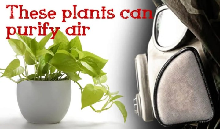 Prepper's Will - 10 Amazing Air Purifying Survival Plants