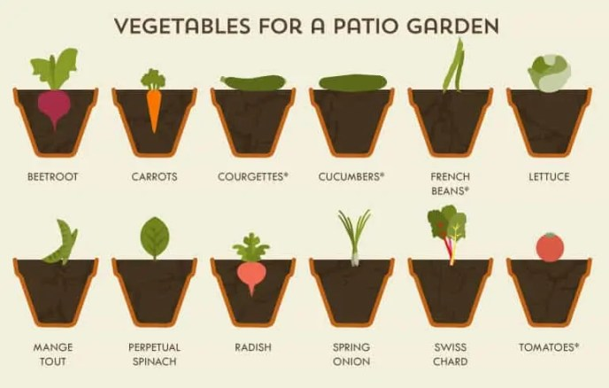 Prepper's Will - Vegetable for a patio garden