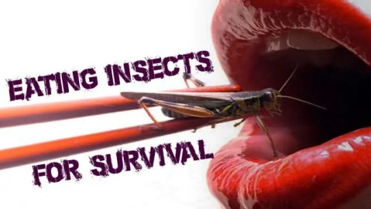 Prepper's Will - Edible Insects