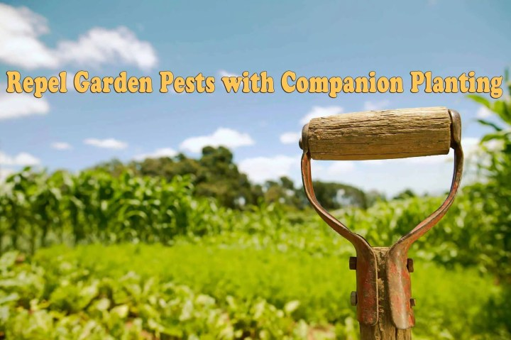 Prepper's Will - Repel garden pests with Companion planting