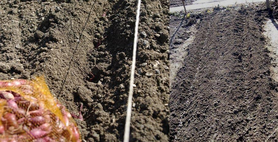 Backyard garden - marking the planting rows