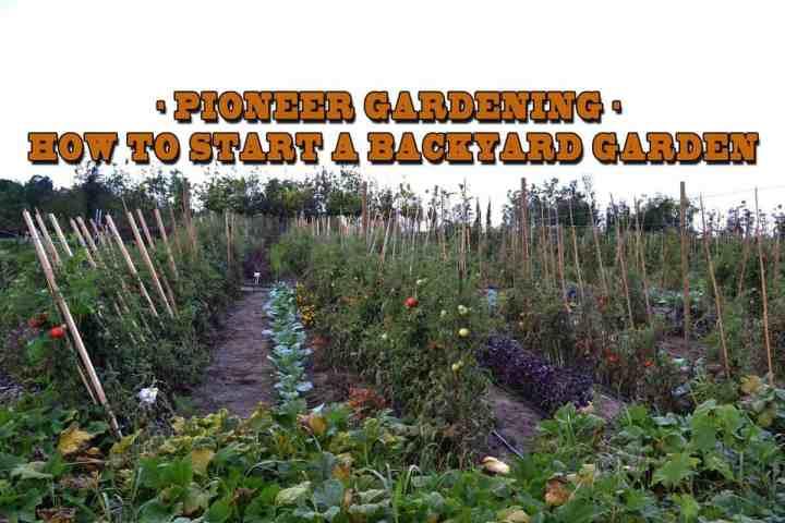 Prepper's Will - How to start a backyard garden