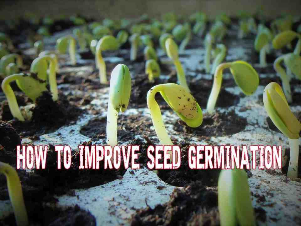 How To Improve Seed Germination