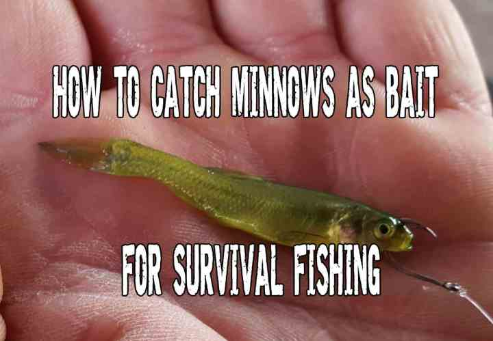 How To Catch Minnows as Bait for Survival Fishing