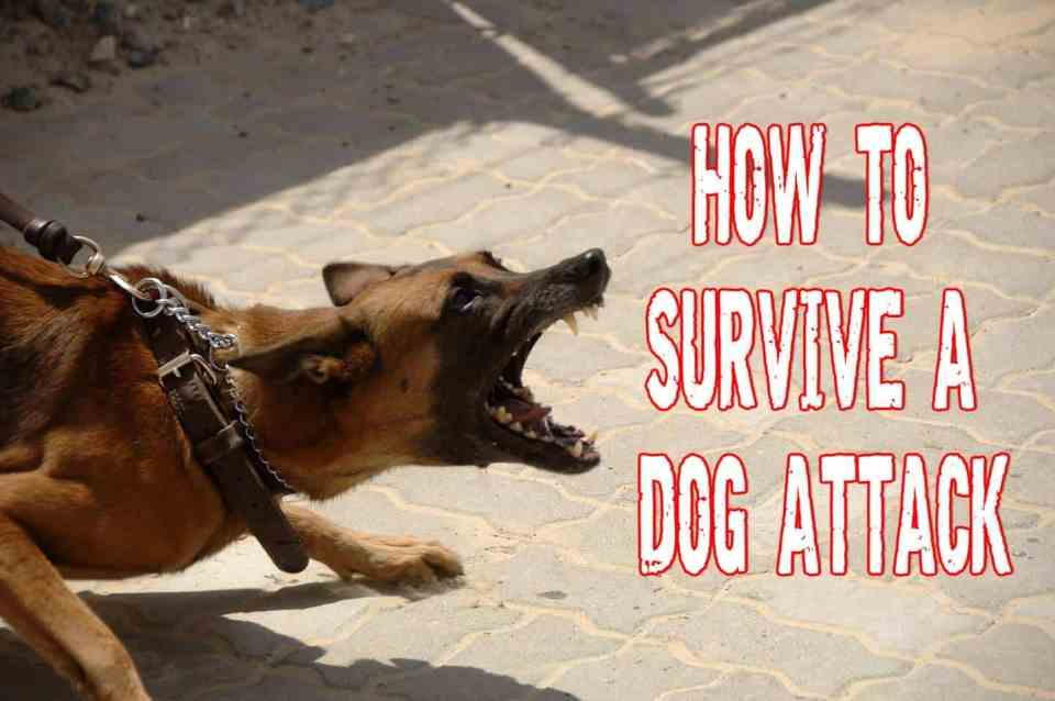 Tips on How To Survive A Dog Attack