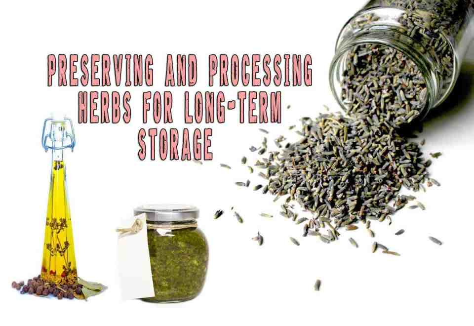 Preserving And Processing Herbs For Long-term Storage And Use