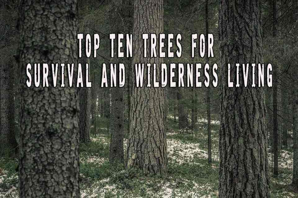 Top Ten Trees For Survival And Wilderness Living