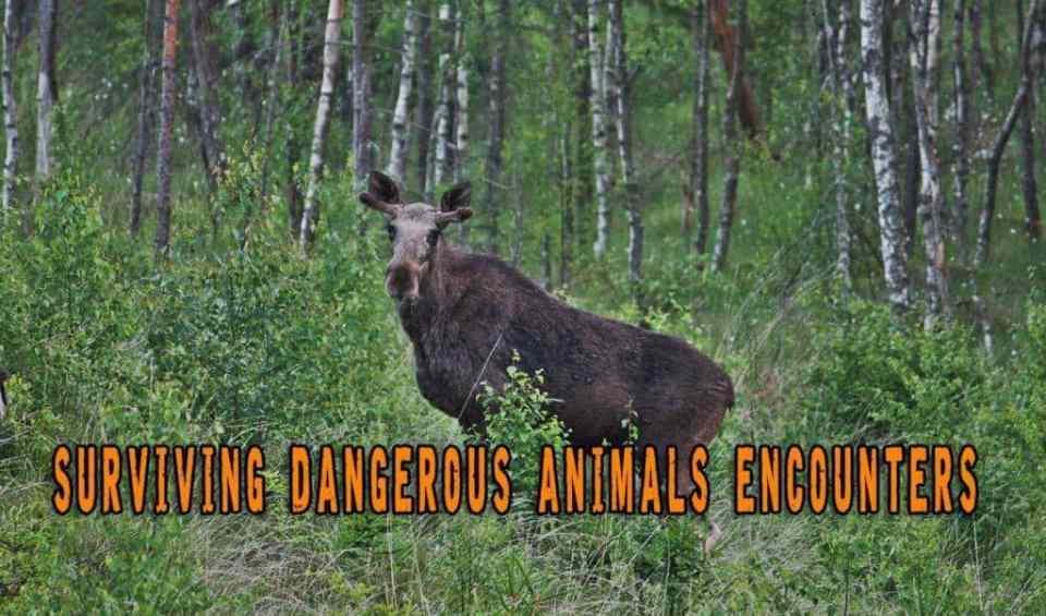 Critter Chaos and Dangerous Animals Encounters
