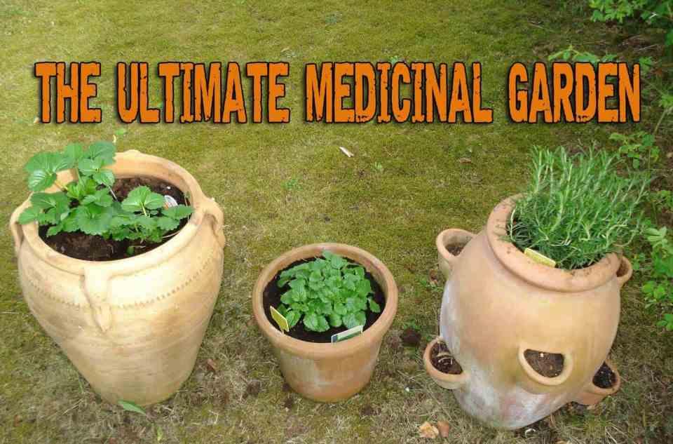 The Ultimate Medicinal Garden