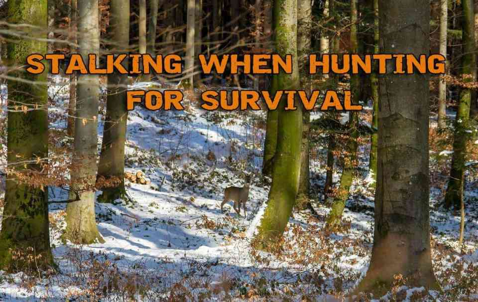 Mastering The Skill Of Stalking When Hunting For Survival