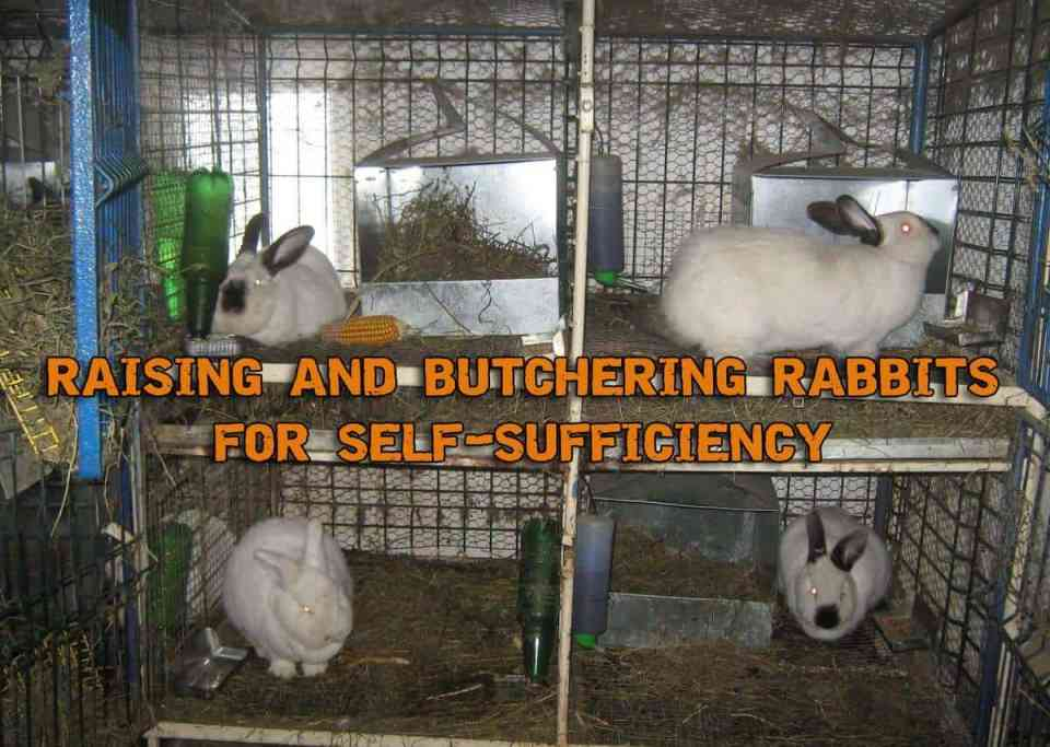 Raising Rabbits And Butchering Them For Organic Meat