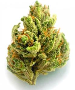 London Pound mintz is an indica dominant hybrid strain created through crossing the deliciousSunset Sherbetwith another indica-heavy hybrid strain.
