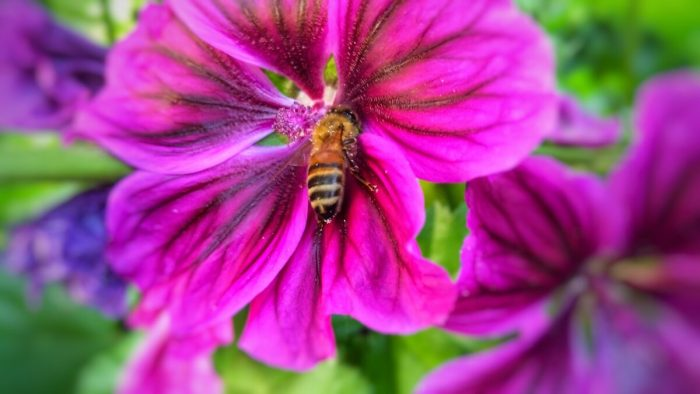 Blüte mit Wespe