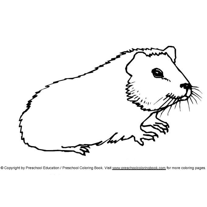 Www Preschoolcoloringbook Com Animal Coloring Page