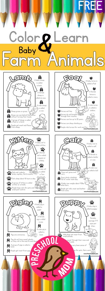 Kitten Coloring Pages Color