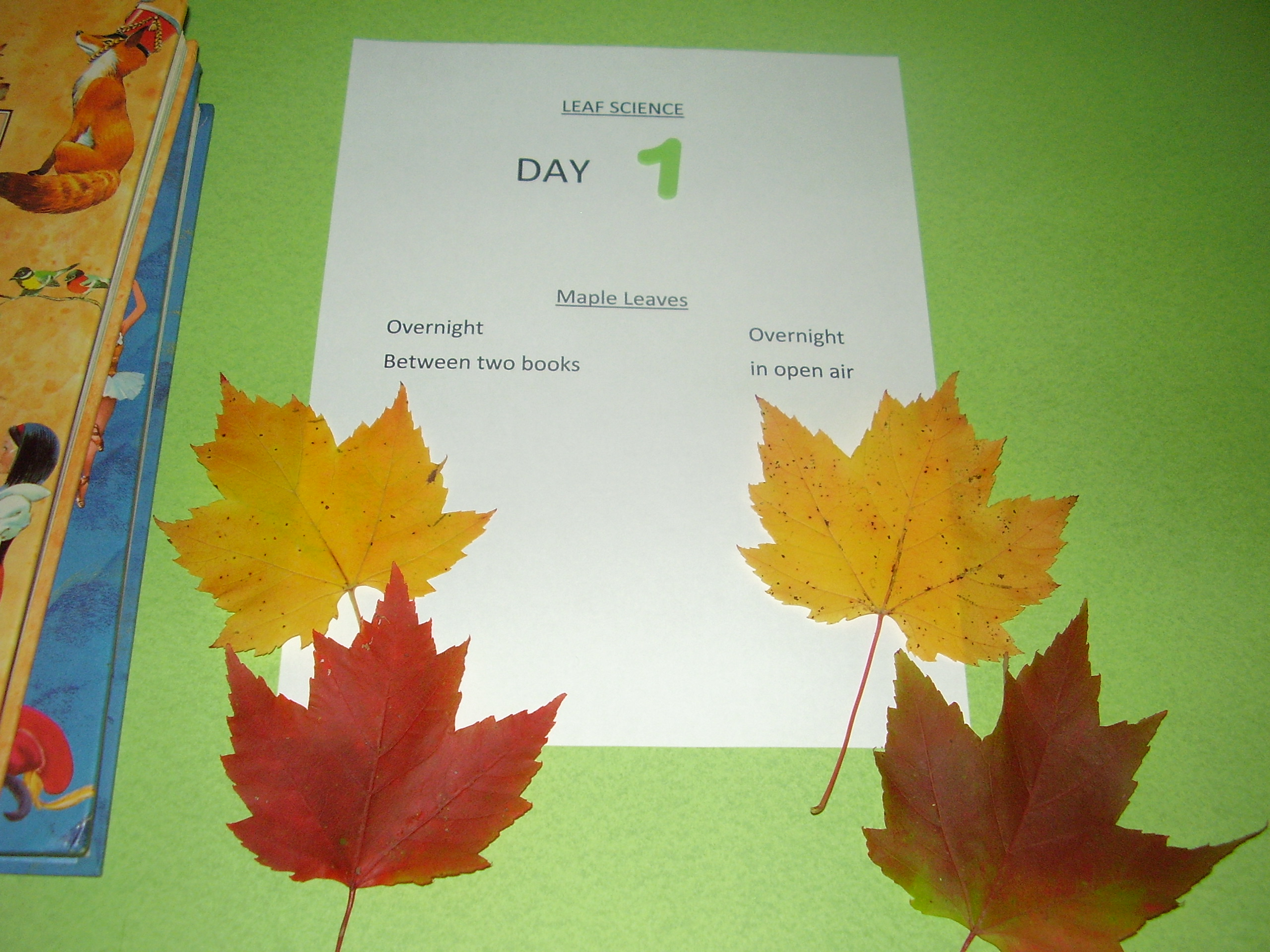 Preschool Leaf Science Observing Autumn Leaves Preschool Toolkit