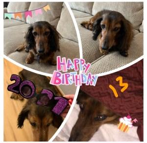 Happy Birthday to Max the Dog