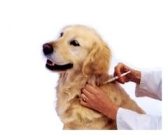vacuna-perros