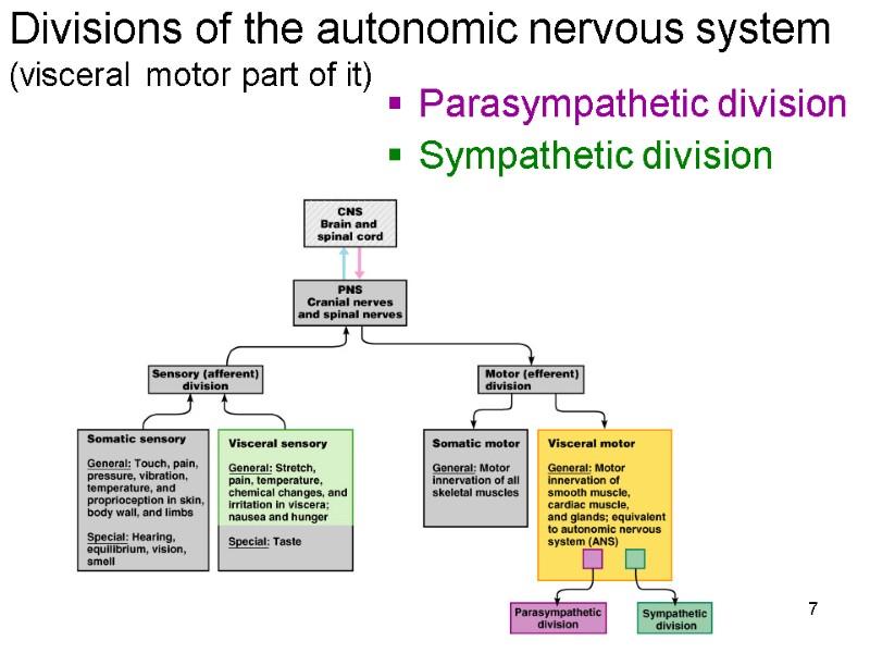 Gambar Autonomic Motor Nerves Innervate Automotivegarage Org Jpeg