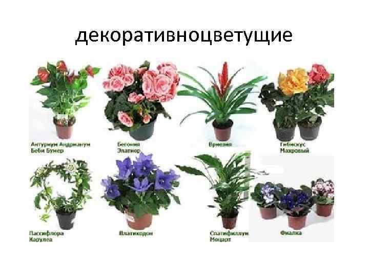 комнатные цветы список с картинками компенсации будет