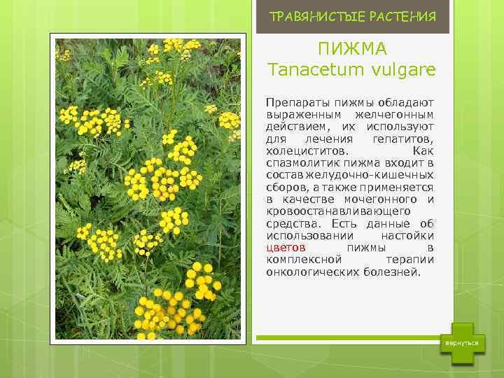 colecția de plante pentru tratamentul varicozei