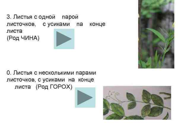 Школьный атлас определитель цветковых растений Учебное ...