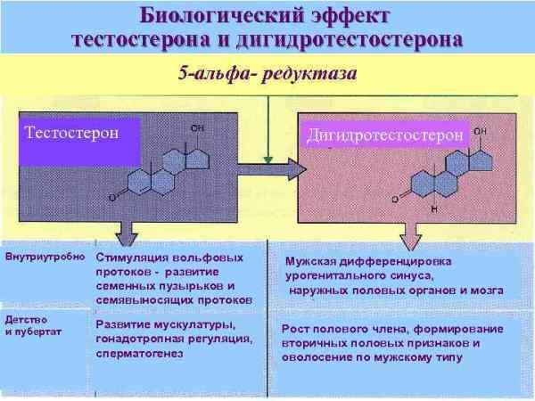 Гиперандрогенные состояния у девочек вопросы патогенеза ...